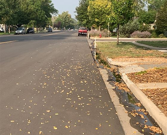 Fall Leaves, town street